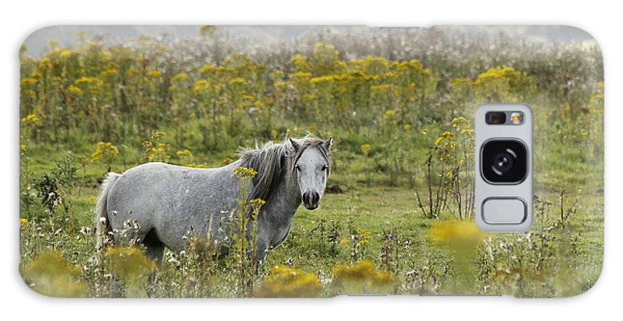 Wales Galaxy S8 Case featuring the photograph Welsh Pony by Simon Gregory