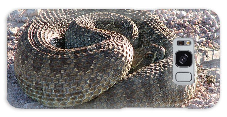 Snake Galaxy S8 Case featuring the photograph Western Dakota Prairie Rattlesnake by Marion Muhm