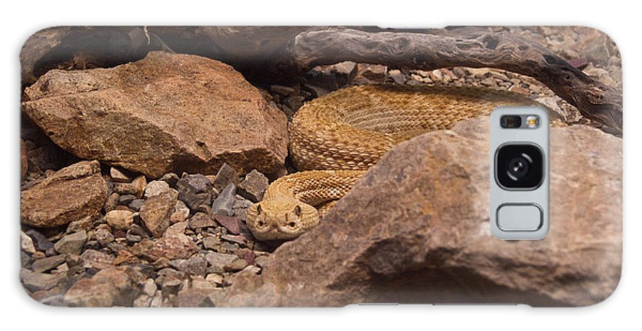 Rattlesnake Galaxy S8 Case featuring the photograph Western Diamondback Rattlesnake by Douglas Barnett