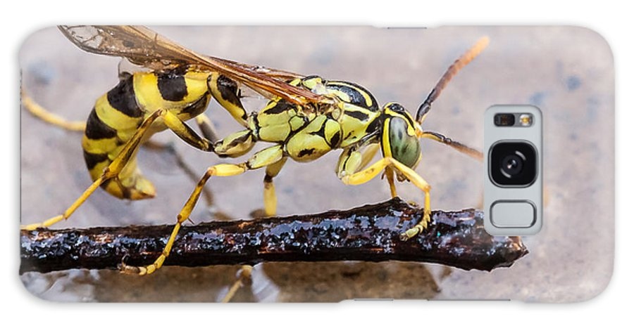 Aggressive Galaxy S8 Case featuring the photograph Wet Wasp by Craig Lapsley