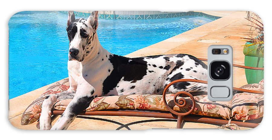 Harlequin Great Dane Galaxy S8 Case featuring the photograph What A Life by Tony Franza