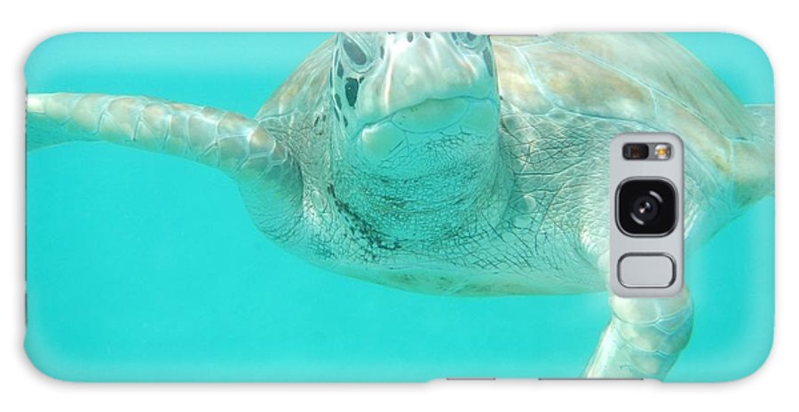 Sea Turtles Galaxy S8 Case featuring the photograph What Do You Want by Catie Canetti