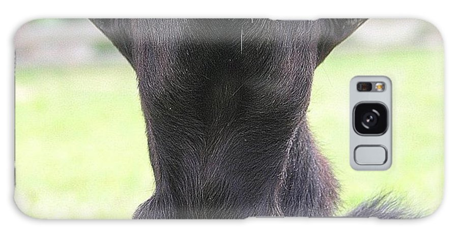 Goat Galaxy S8 Case featuring the photograph Whats Up by Mary Deal