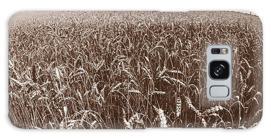 Wheat Galaxy S8 Case featuring the photograph Wheat Fields Forever by Steven Huszar