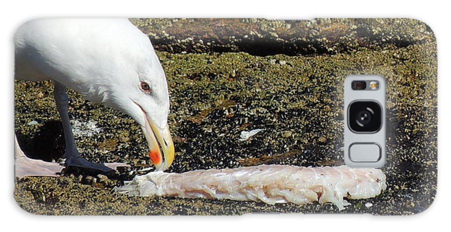 Seagull Galaxy S8 Case featuring the photograph Where Did The Seagull Get The Fillet by Anastasia Konn