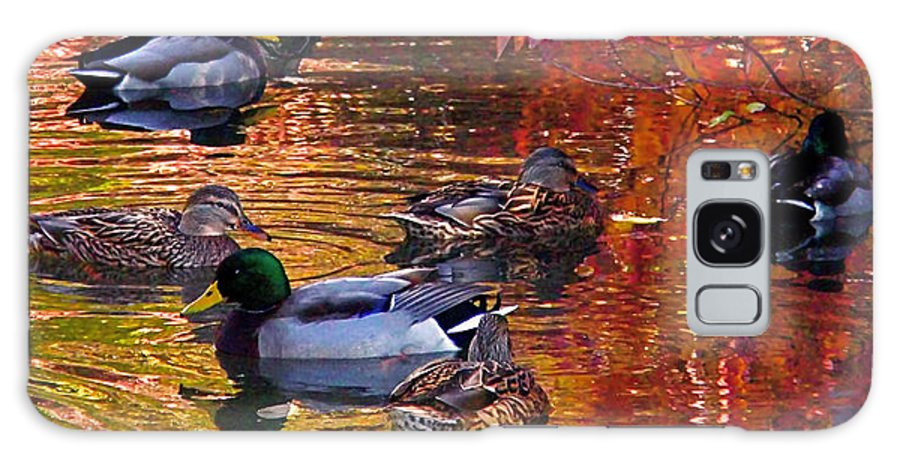 Mallards Galaxy S8 Case featuring the photograph Which Way by Rona Black