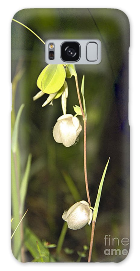 Wildflowers; Globes; Nature; Green; White Galaxy Case featuring the photograph Whispers by Kathy McClure