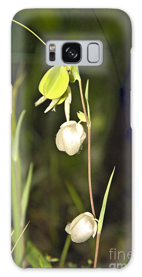 Wildflowers; Globes; Nature; Green; White Galaxy S8 Case featuring the photograph Whispers by Kathy McClure