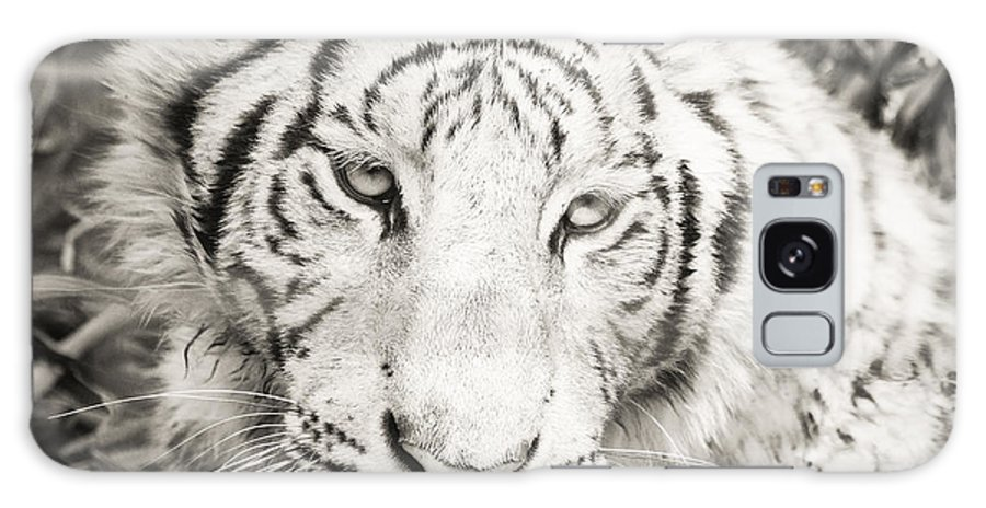 This White Tiger Was Taken At Cat Haven Near The Kings Canyon National Park. Galaxy S8 Case featuring the photograph White Tiger by Vincent Bonafede