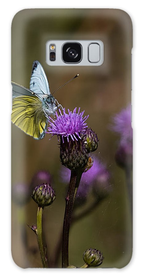 Butterfly Galaxy S8 Case featuring the photograph White And Yellow Butterfly On Thistl by Leif Sohlman