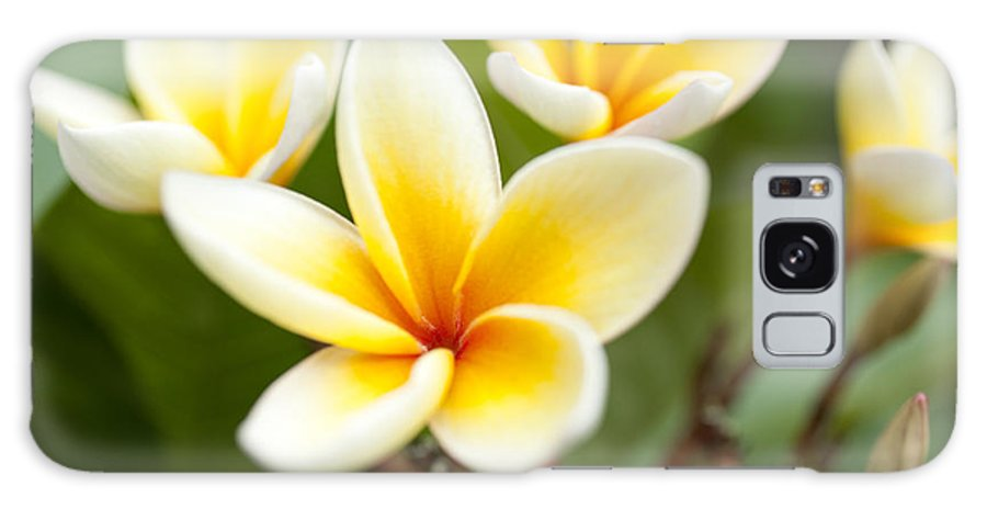 Hawaii Galaxy S8 Case featuring the photograph White And Yellow Plumeria Flowers by Charmian Vistaunet