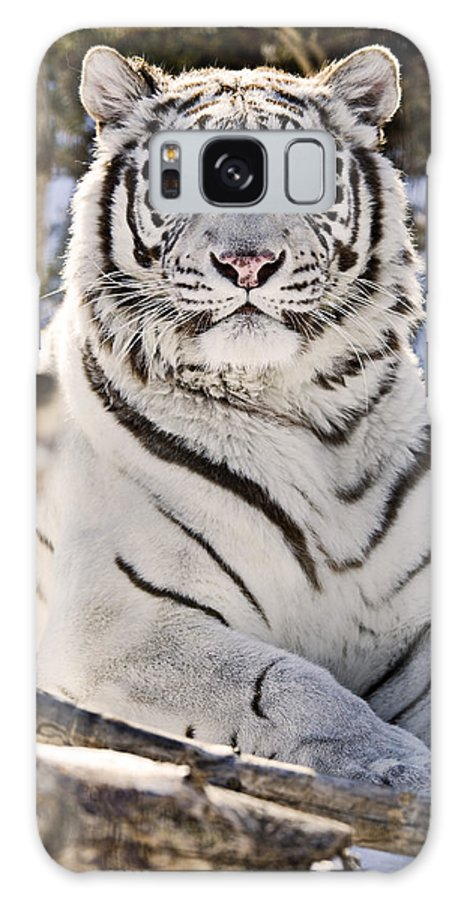 Light Galaxy S8 Case featuring the photograph White Bengal Tiger, Forestry Farm by Chad Coombs