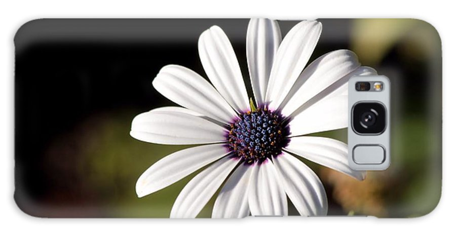 Daisy Galaxy S8 Case featuring the photograph White Daisy by Kenny Glotfelty