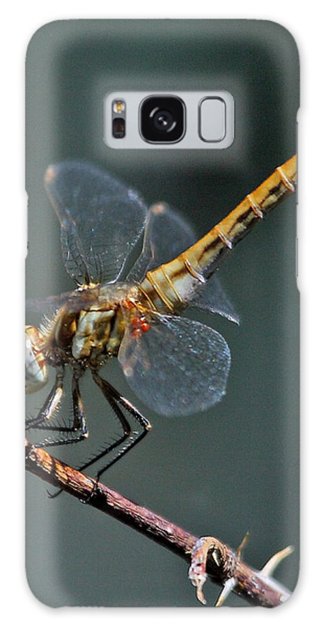 Nature Galaxy S8 Case featuring the photograph White-faced Meadowhawk by David Salter