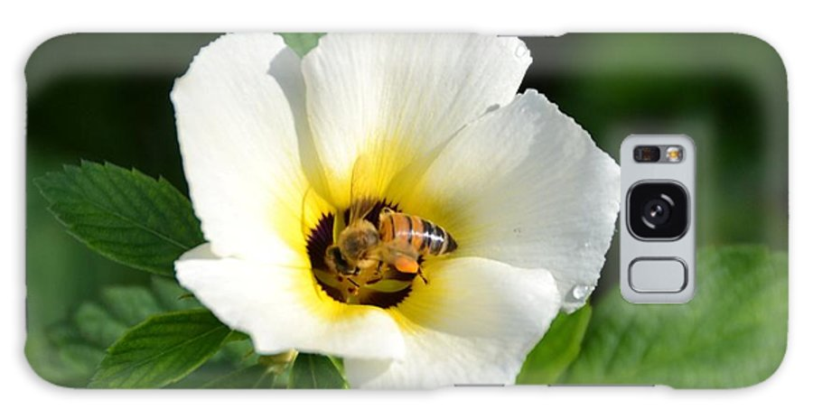 White Flower- Nectar Galaxy S8 Case featuring the photograph White Flower- Nectar by Darla Wood