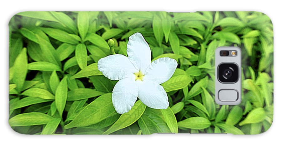 White Galaxy S8 Case featuring the photograph White Flower On Green by Girish J