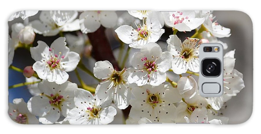 White Galaxy S8 Case featuring the photograph White Flowering Tree Flowers by P S