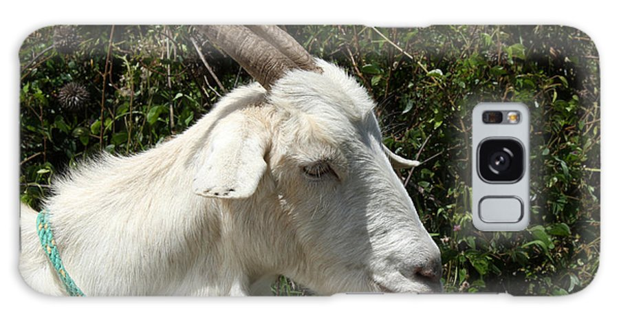 Goat Galaxy S8 Case featuring the photograph White Goat On A Farm by Robert Hamm