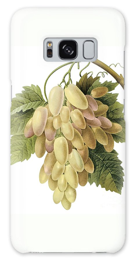 Fruit Galaxy S8 Case featuring the drawing White Grapes by Spencer McKain