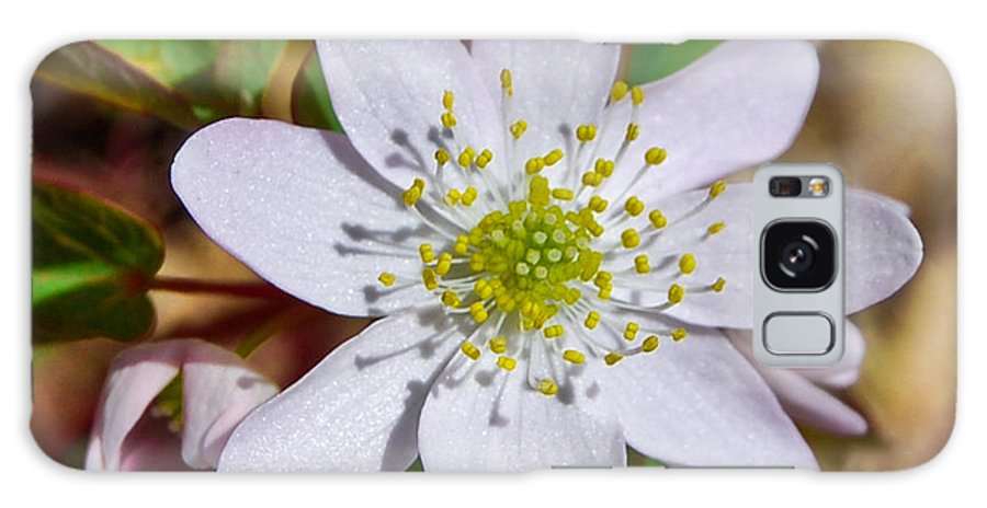 Galaxy S8 Case featuring the photograph White Hepatica 2 by Becky Anders