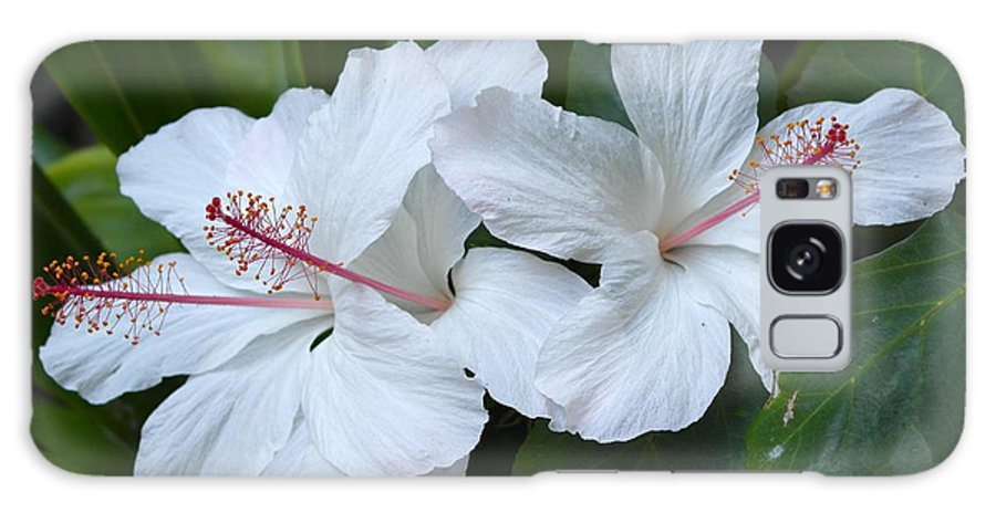 Hibiscus Galaxy S8 Case featuring the photograph White Hibiscus Trio Waikiki by Michele Myers