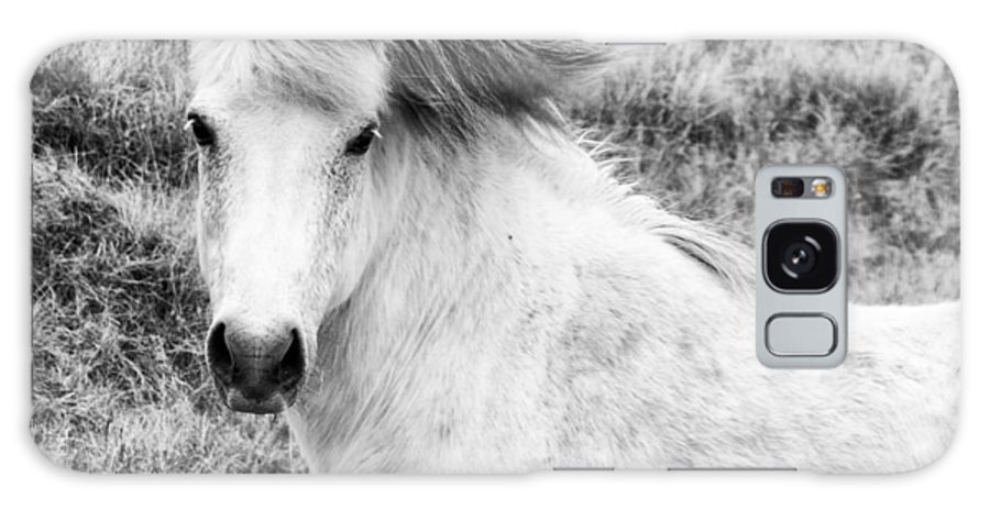 2013 Galaxy S8 Case featuring the photograph White Horse by Nick Bellistri