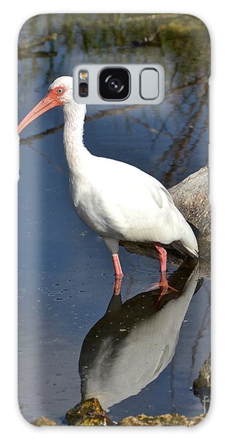Ibis Galaxy S8 Case featuring the photograph White Ibis by Carol Bradley