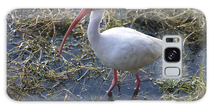 Ibis Galaxy S8 Case featuring the photograph White Ibis In The Swamp by Christiane Schulze Art And Photography