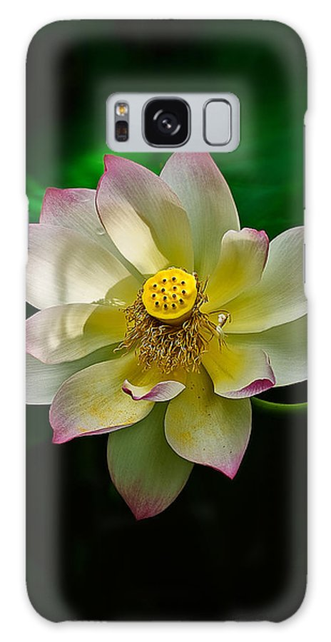 Lotus Galaxy S8 Case featuring the photograph White Lotus by Rick Barnard