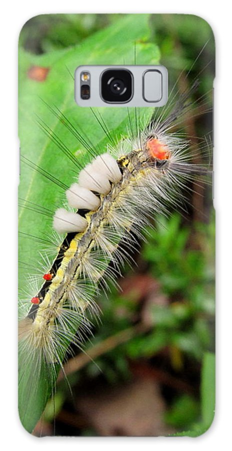 White Marked Tussock Caterpillar Images North American Caterpillars Creatures Of The Forest Colorful Caterpillars Hairy Caterpillars Yellow White Black Red Caterpillars North American Insects Appalachian Caterpillars Maryland Caterpillars Pennsylvania Caterpillars Colorful Bugs Preserve Biodiversity Rare Creatures Of The Forest Beings Of The Woodland Ecosystem Biodiversity Colorful Critters Natural Design In Nature Fine Art Galaxy S8 Case featuring the photograph White Marked Tussock by Joshua Bales