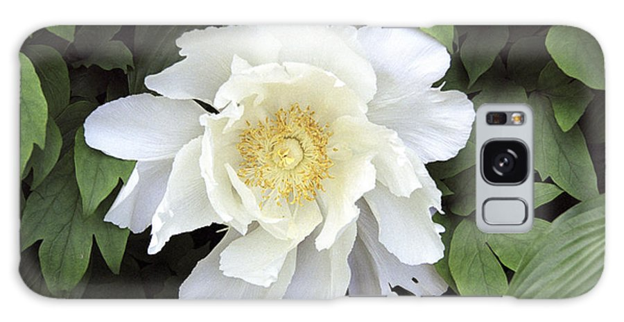 White Galaxy S8 Case featuring the photograph White Peonies by Richard Kitchen