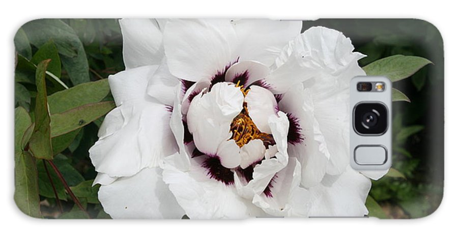 Flowers Galaxy S8 Case featuring the photograph White Peony by Christiane Schulze Art And Photography
