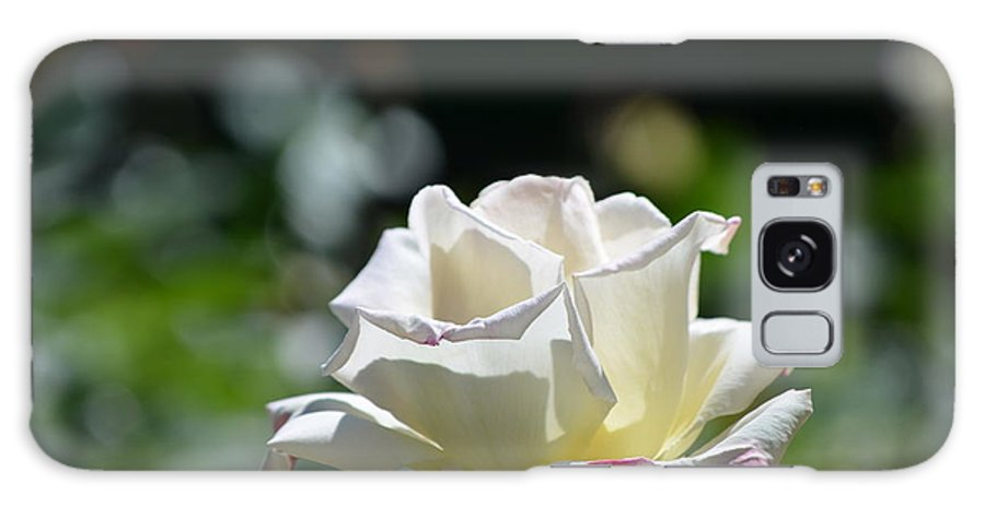 White Rose Galaxy S8 Case featuring the photograph White Roses by DejaVu Designs