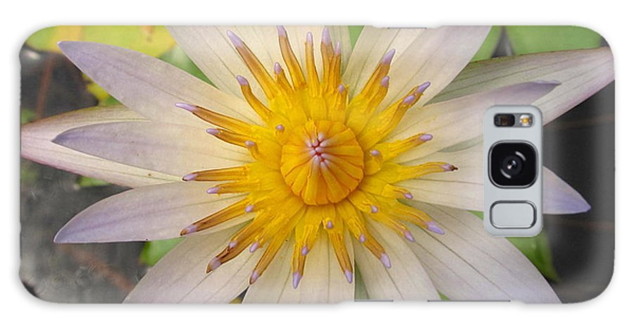 White Star Lotus White Lotus Flower Aquatic Flowers Aquatic Flora Aquatic Plants Water Garden Flora Pond Plants White Water Lily Lotus Blooms Lotus Blossoms Divine Design In Nature Rare Flowers Exotic Flora Beautiful Being Galaxy S8 Case featuring the photograph White Star Lotus by Joshua Bales