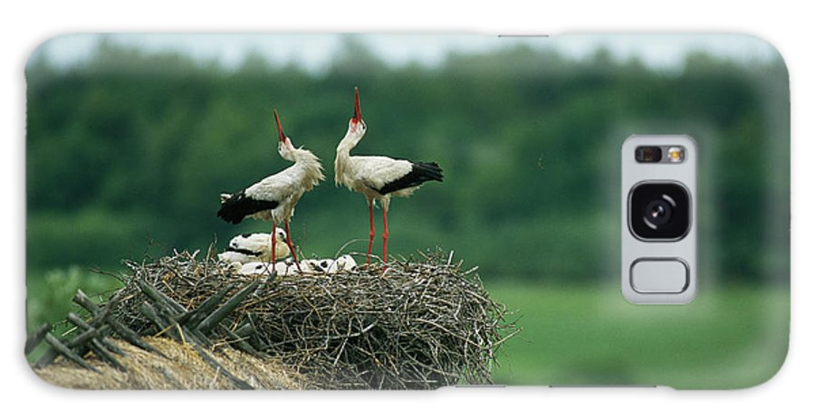 Animals Galaxy S8 Case featuring the photograph White Storks Displaying In Their Nest by Klaus Nigge