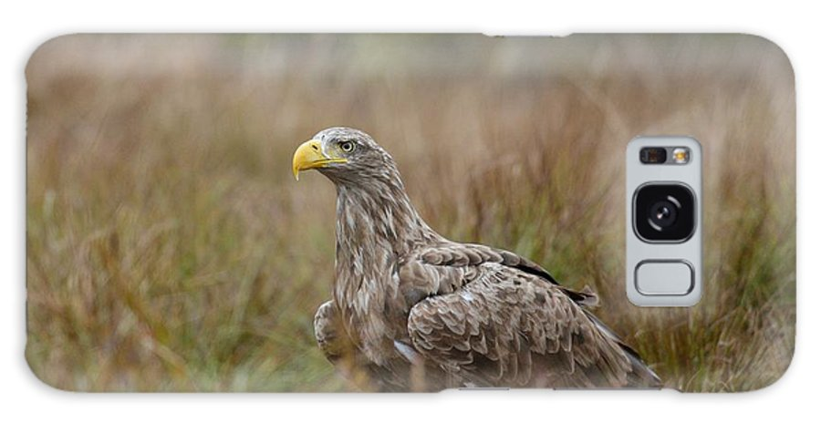 Eagle Galaxy S8 Case featuring the photograph White-tailed Eagle by Erik Mandre
