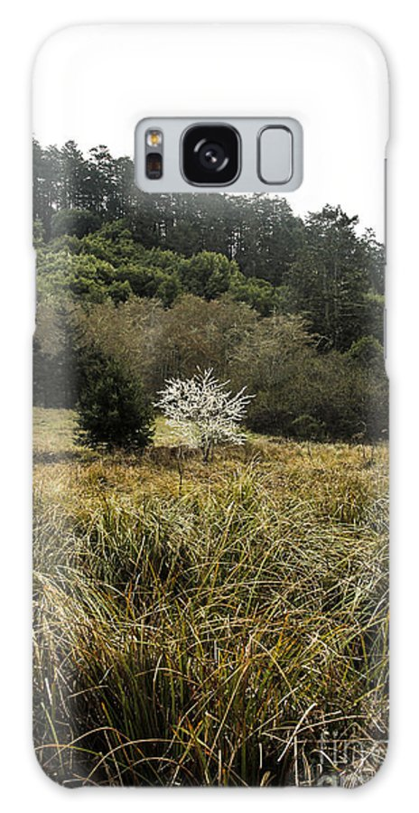 Tree Galaxy S8 Case featuring the photograph White Tree by Tim Tolok