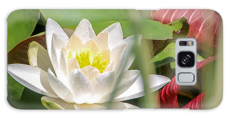 Rochester Galaxy S8 Case featuring the photograph White Water Lilly Or Lotus Flower by Meegan Streeter