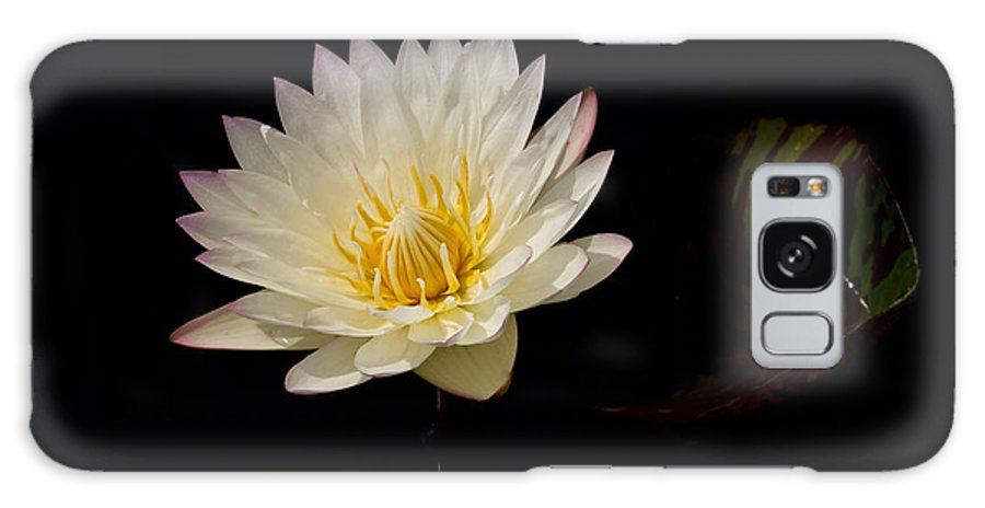 White Water Lily Lilypad Flower Yellow Pond Galaxy S8 Case featuring the photograph White Water Lily 2 by Patton Imagery