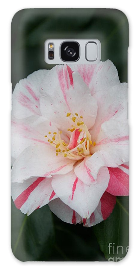 White Camellia Galaxy S8 Case featuring the photograph White With Pink Camellia by Christiane Schulze Art And Photography