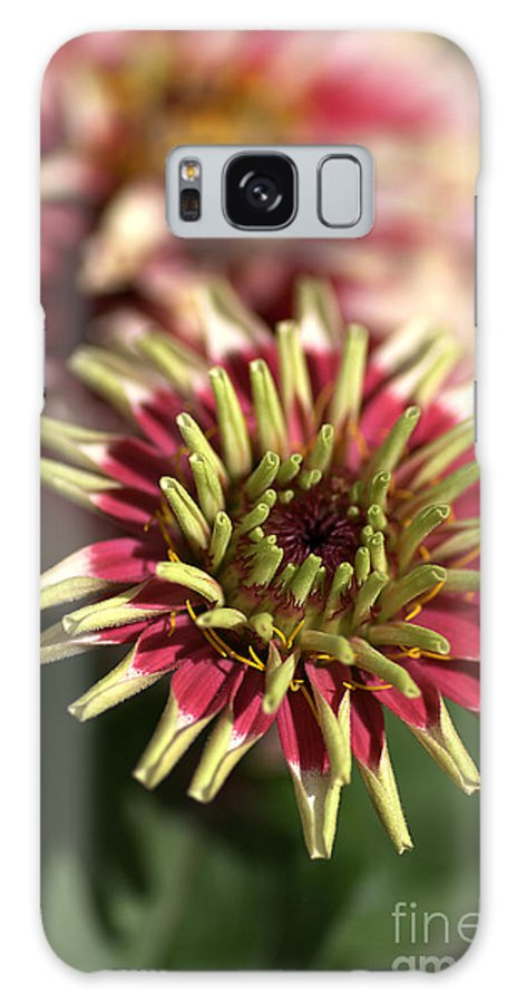 Flower Galaxy S8 Case featuring the photograph White Zinnia by Joy Watson