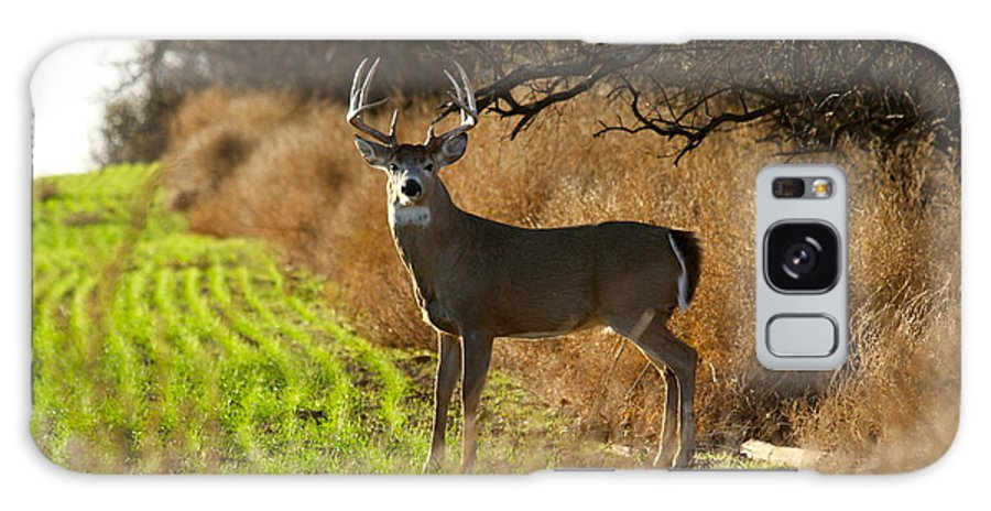 Whitetail Galaxy S8 Case featuring the photograph Whitetail Buck by Krista Wimmer