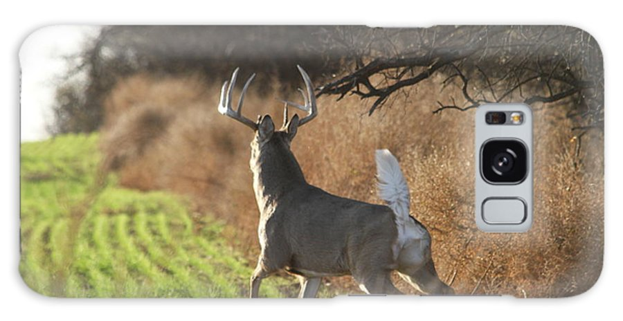 Deer Galaxy S8 Case featuring the photograph Whitetail Buck Rut by Krista Wimmer