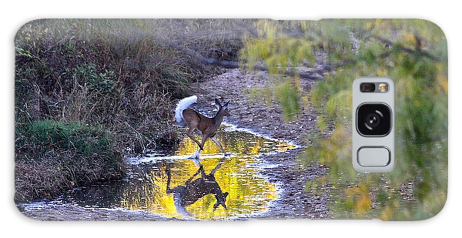Deer Galaxy S8 Case featuring the photograph Whitetail Deer Mirrored by Krista Wimmer