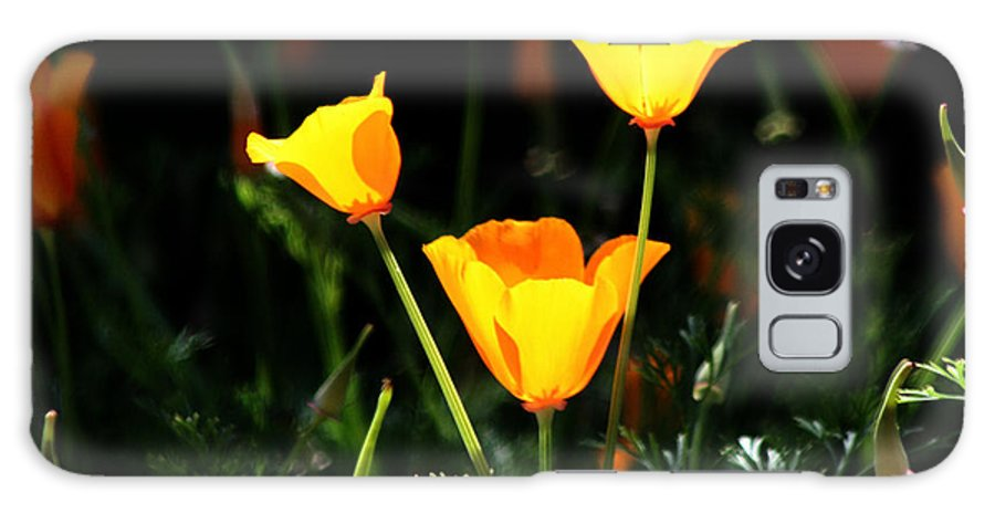 California Poppy Galaxy S8 Case featuring the photograph Who Is Ur Poppy by Joseph Coulombe