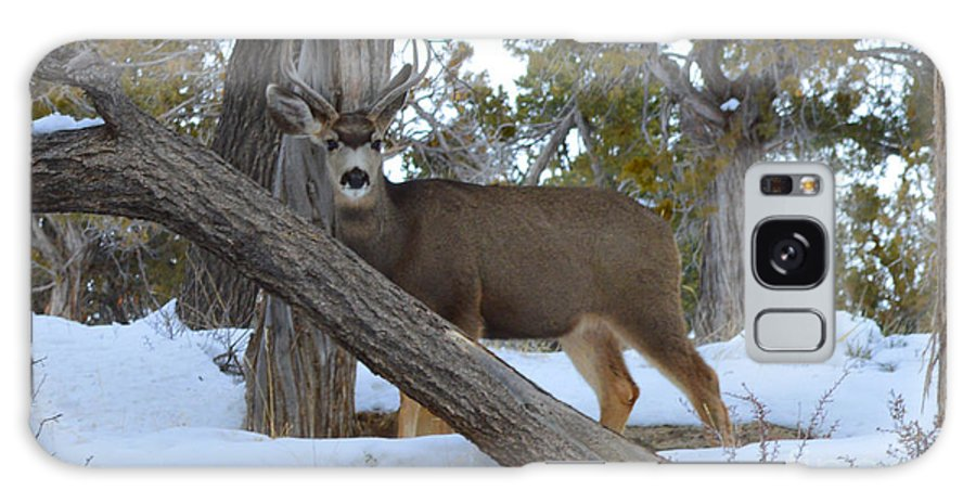 Deer Galaxy S8 Case featuring the photograph Who Me? Oh Deer by Meandering Photography
