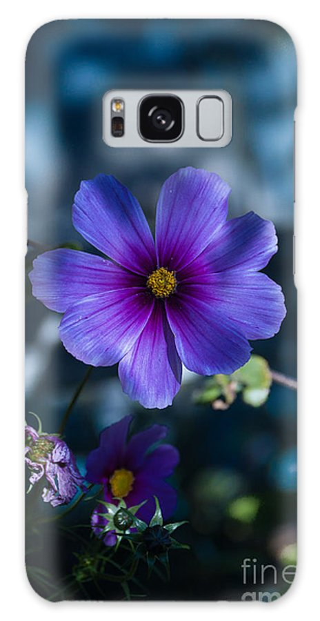 Flower Galaxy S8 Case featuring the photograph Who You Calling A Pansy? by Rich Priest