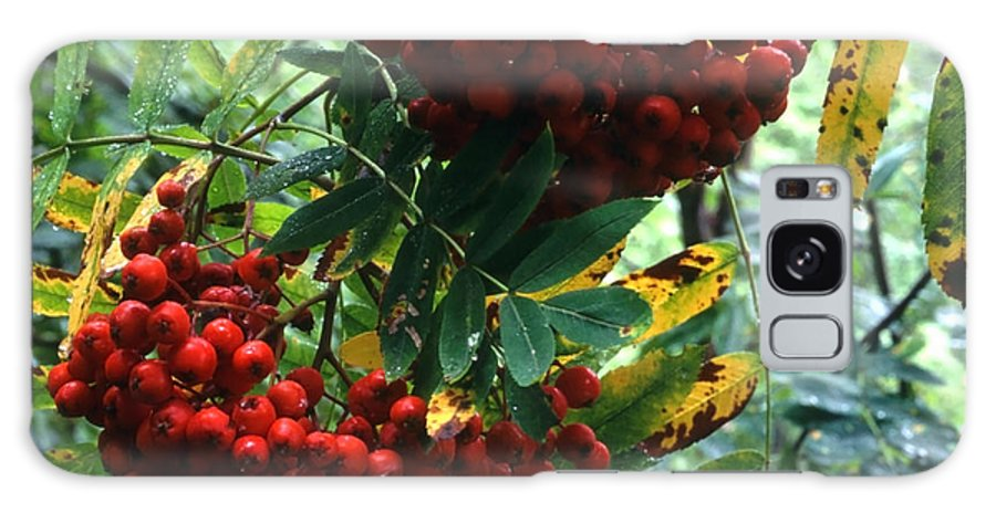 Berry Galaxy S8 Case featuring the photograph Wild Berry by IB Photography