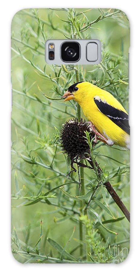 Bird Galaxy S8 Case featuring the photograph Wild Canary Bird Closeup by Brandon Alms
