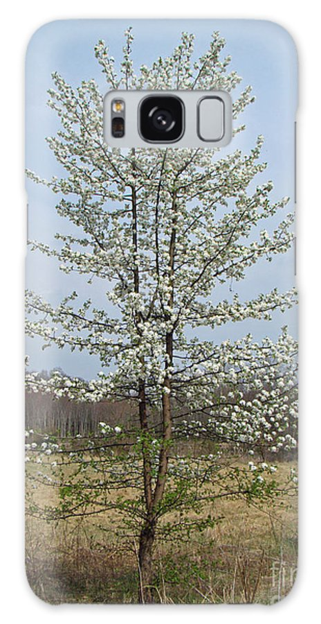 Tree Galaxy S8 Case featuring the photograph Wild Cherry Tree In Spring Bloom by Mother Nature